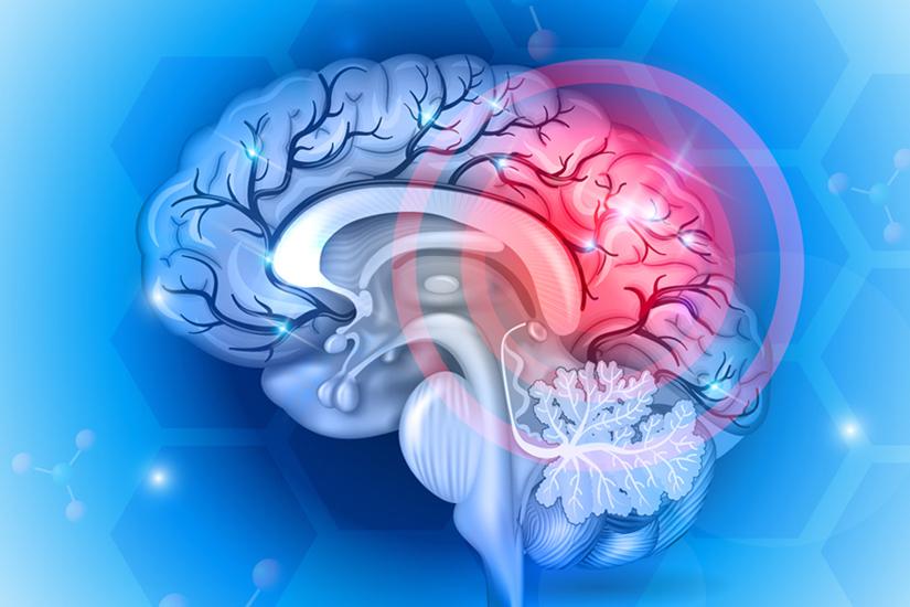 Sagittal Brain View