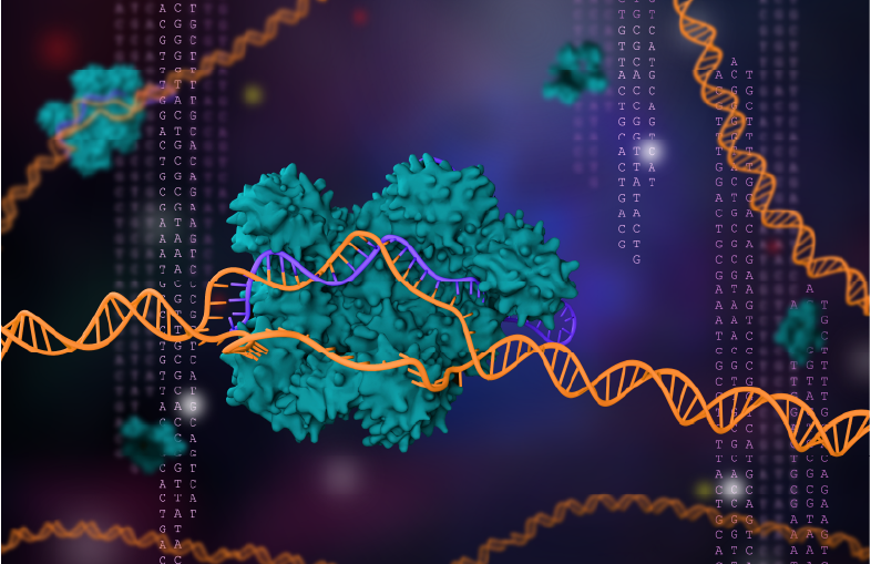 3D rendering of CRISPR-Cas9 replacing DNA segment with matching RNA segment